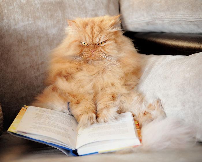 gato-enfadado-18