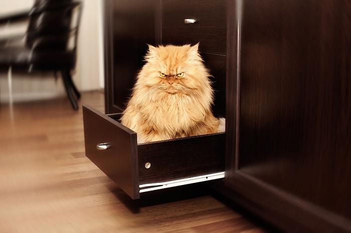 gato-enfadado-2