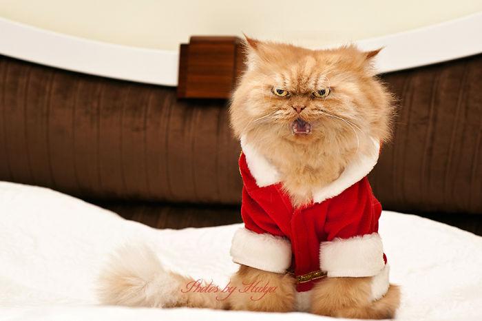 gato-enfadado-5