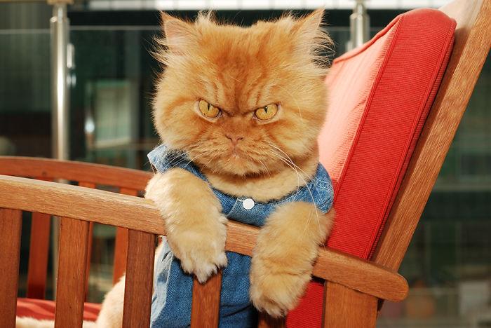 gato-enfadado-7