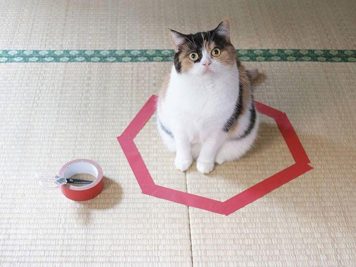 Un sencillo experimento con tu gato está dejando a todo el mundo con la boca abierta