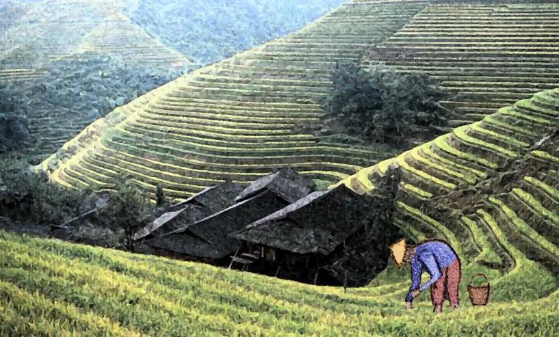 historia-granjero-chino