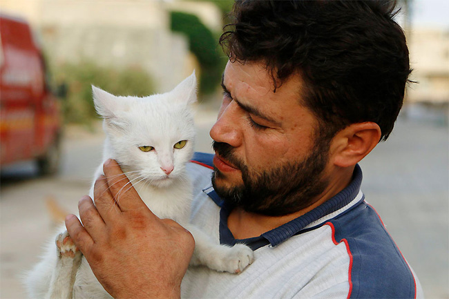 hombre que alimenta gatos 1