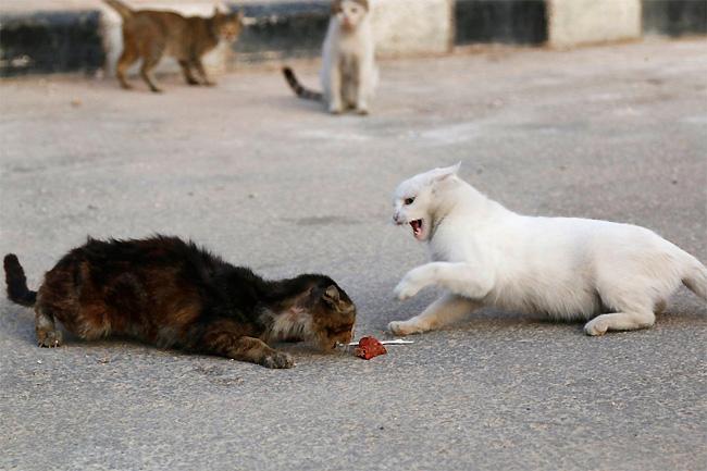 hombre que alimenta gatos 2