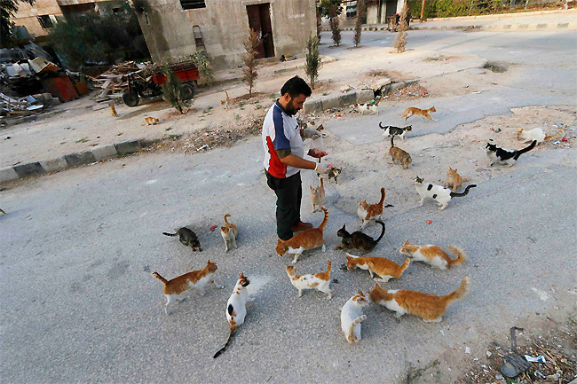 hombre que alimenta gatos 3