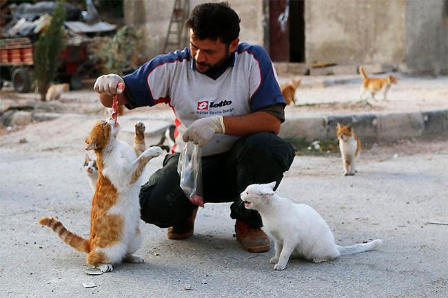 hombre que alimenta gatos 4