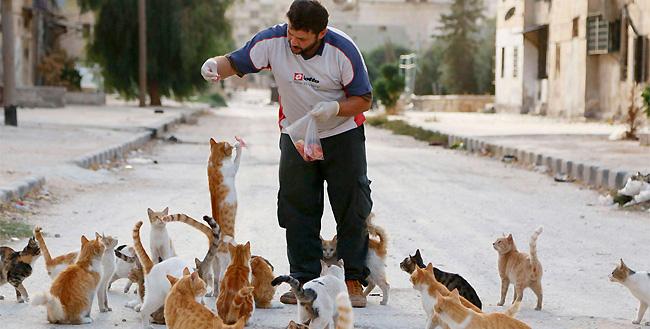 hombre que alimenta gatos 7