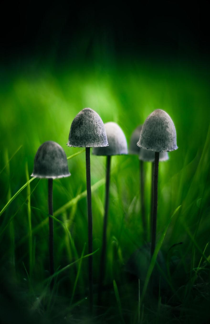 hongos y setas increibles 35