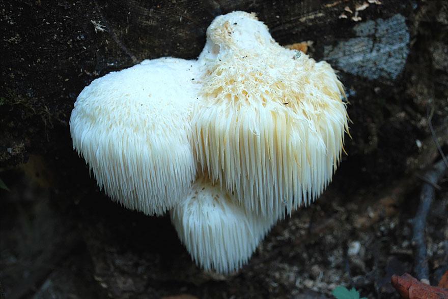 hongos y setas increibles 39