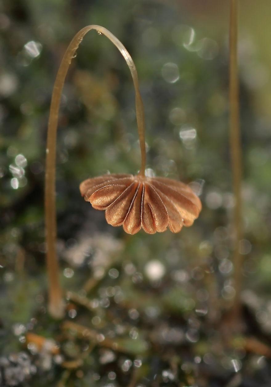 hongos y setas increibles 40