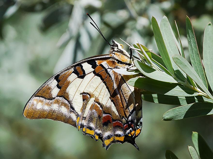 larvas y mariposas 10
