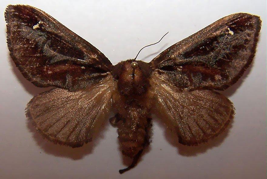 larvas y mariposas 14
