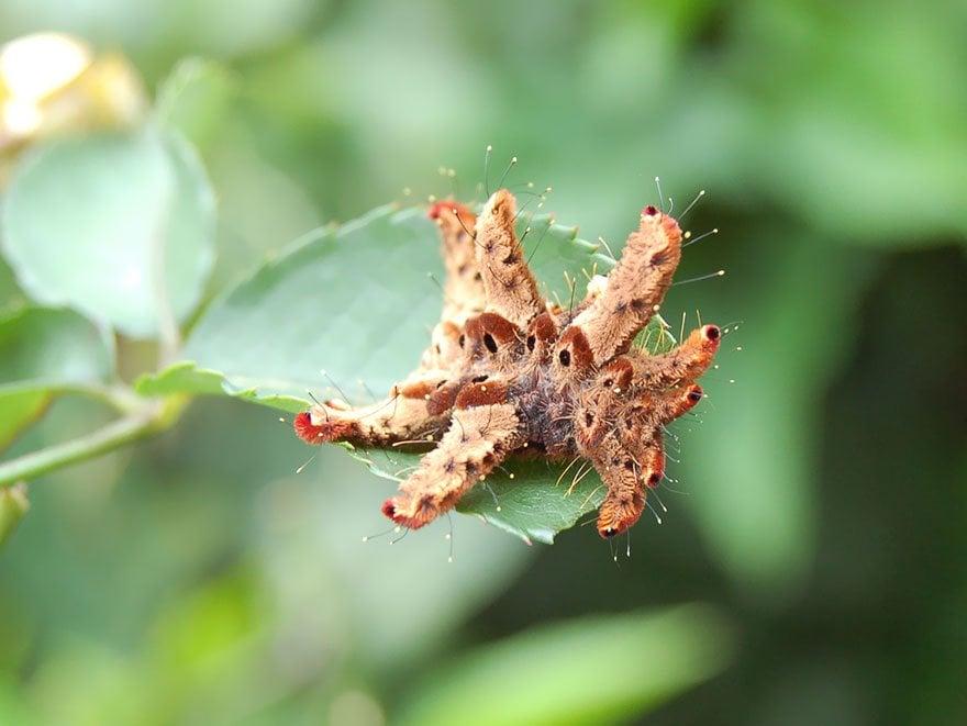 larvas y mariposas 15