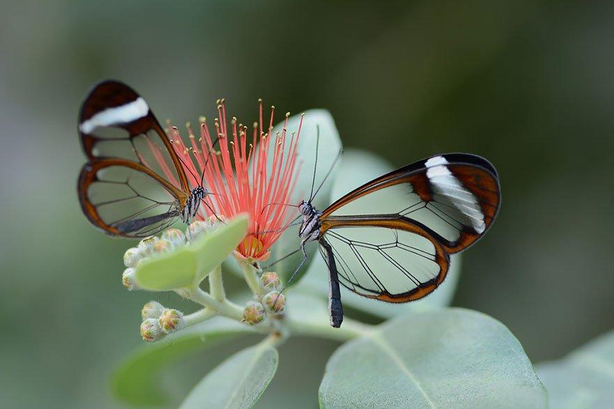 larvas y mariposas 18