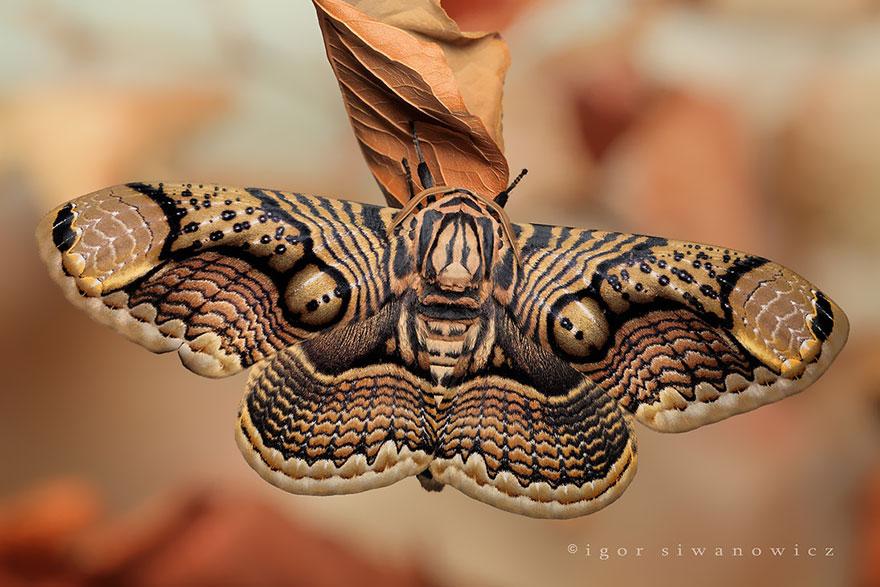larvas y mariposas 2