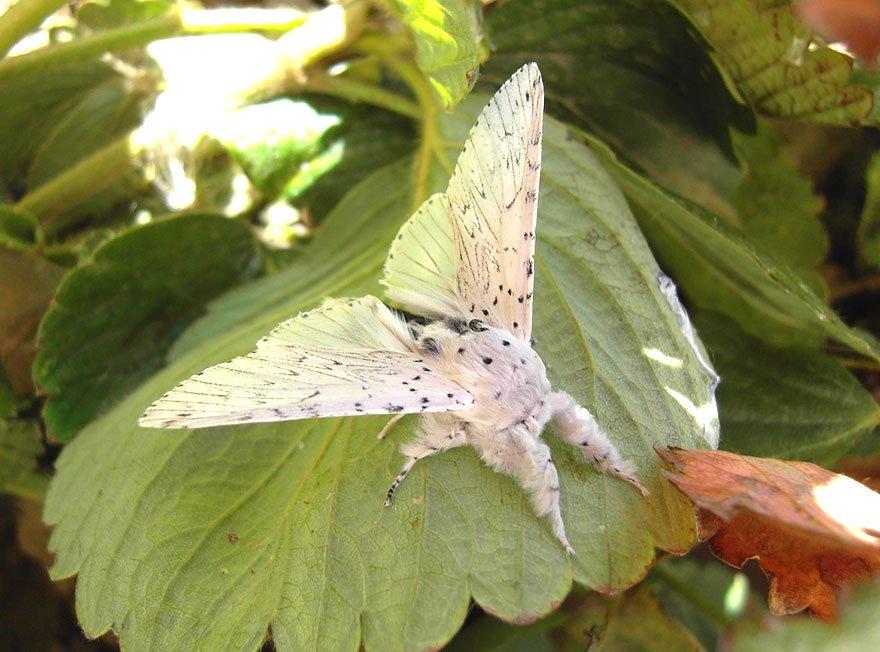 larvas y mariposas 20