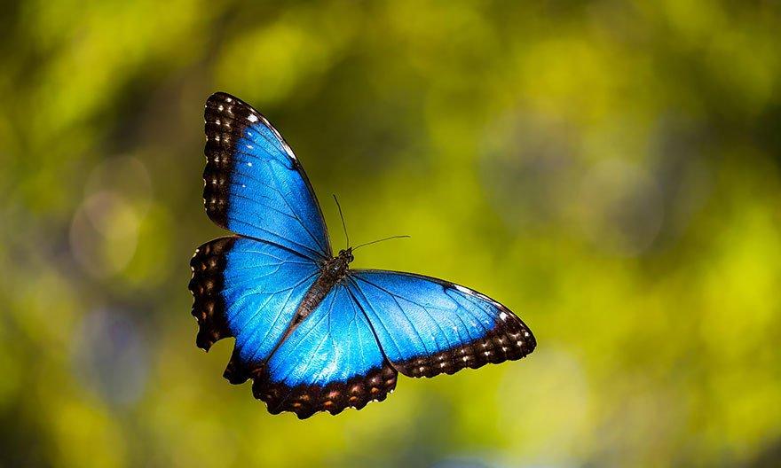 larvas y mariposas 24