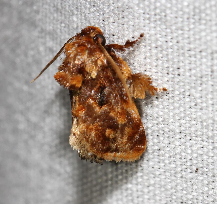 larvas y mariposas 26