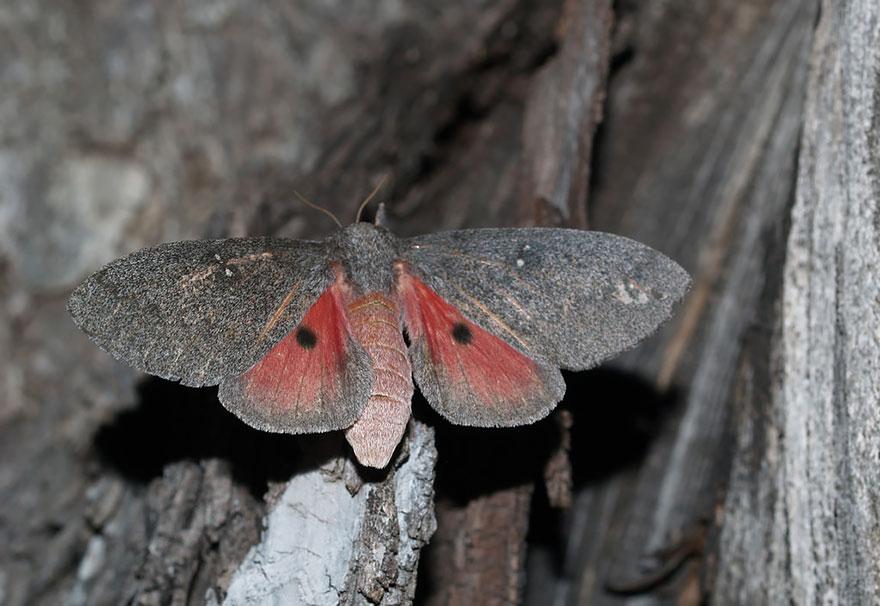 larvas y mariposas 28