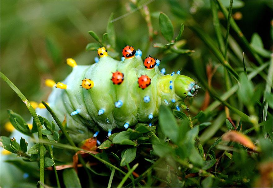 larvas y mariposas 3