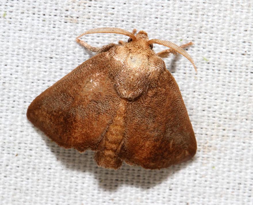 larvas y mariposas 30
