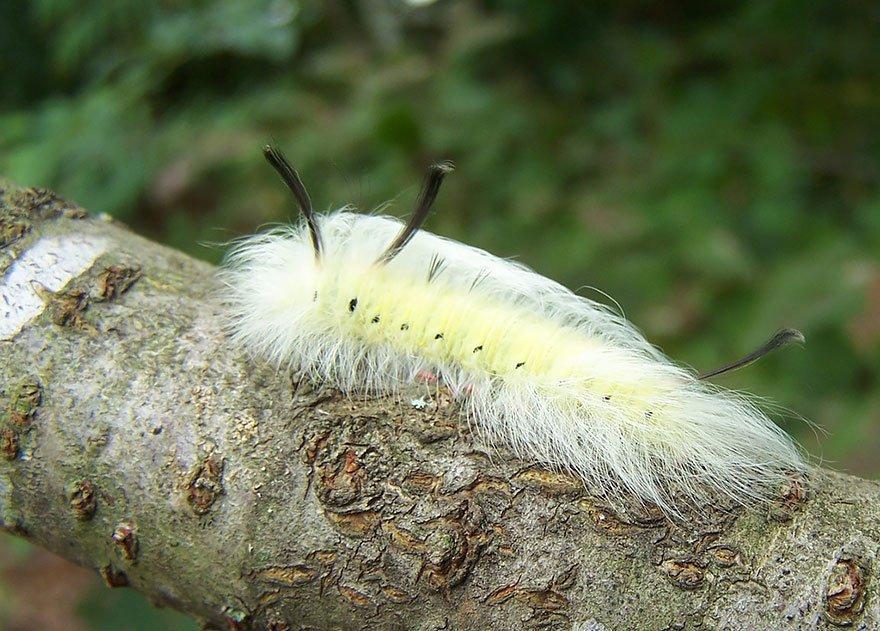 larvas y mariposas 33