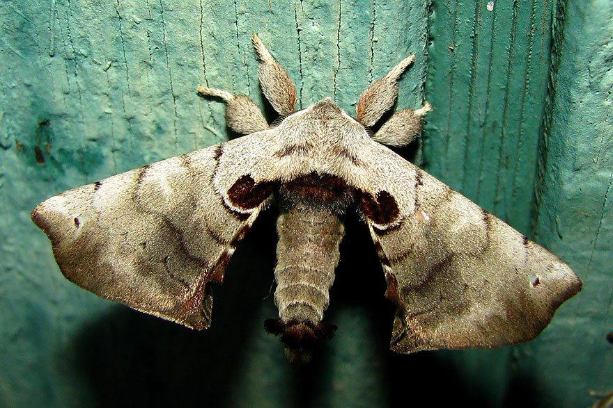 larvas y mariposas 34