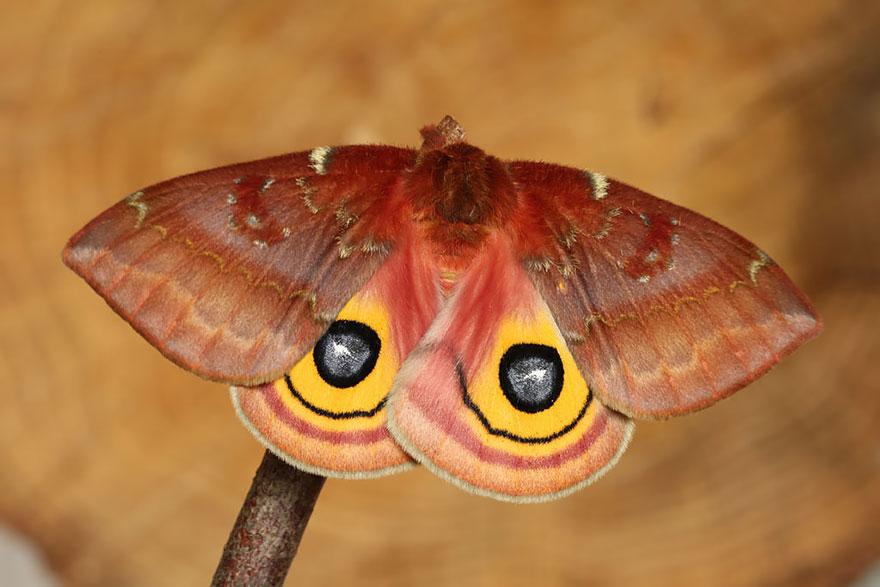larvas y mariposas 36