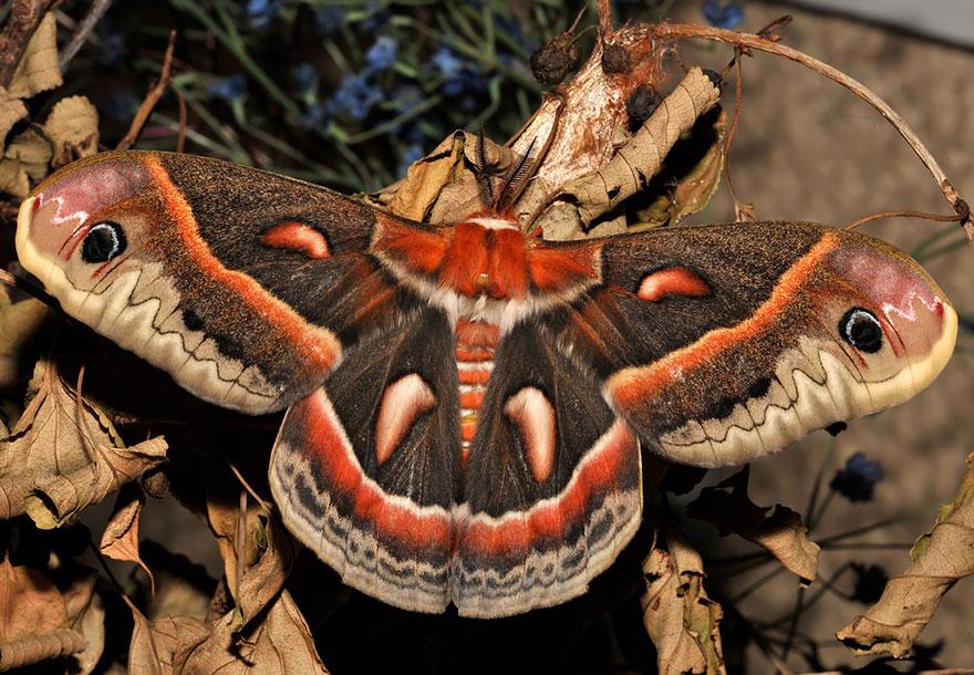 larvas y mariposas 4