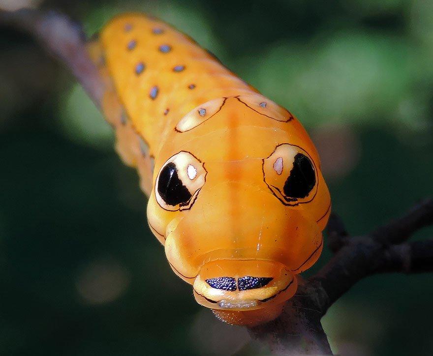 larvas y mariposas 5