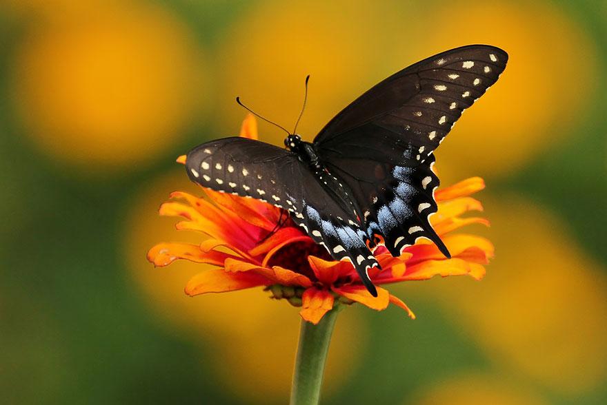 larvas y mariposas 6