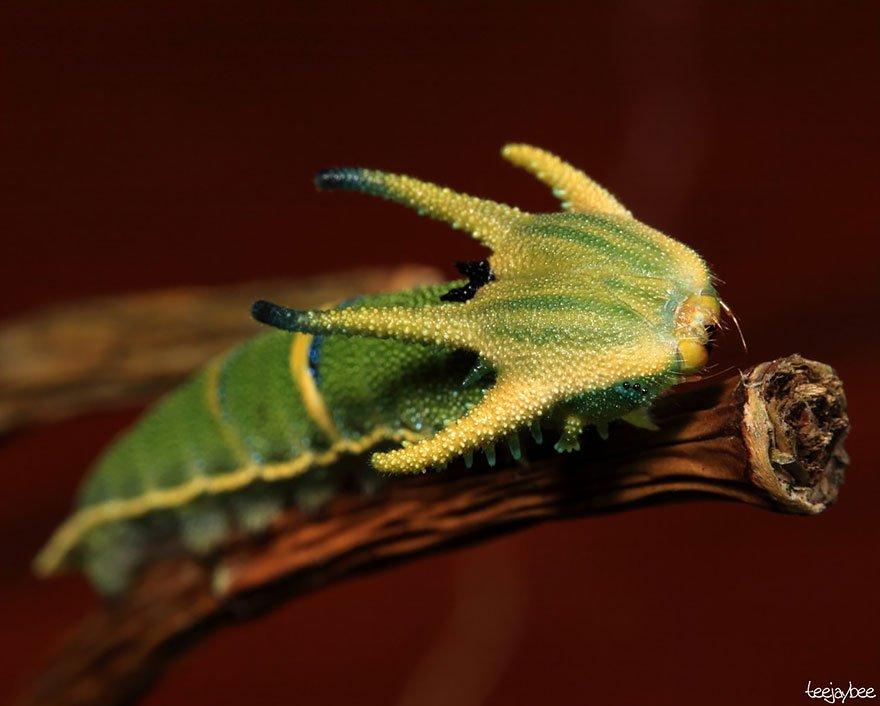 larvas y mariposas 9