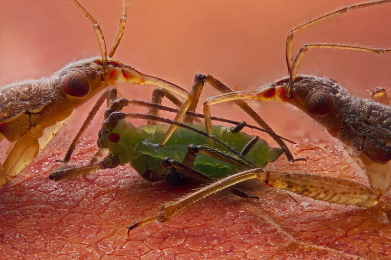 20 impresionantes fotografías microscópicas ganadoras!