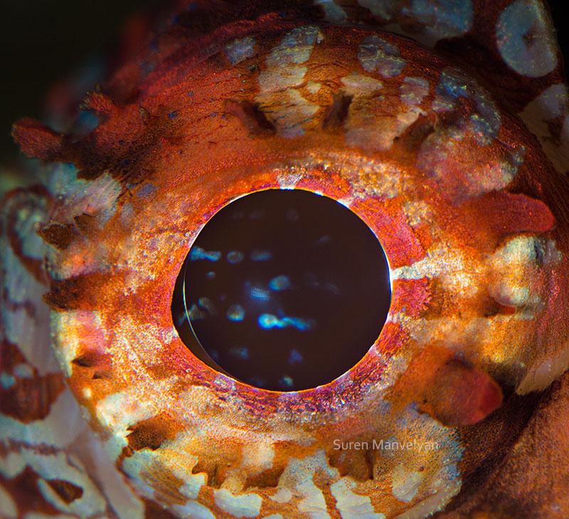 ojos4