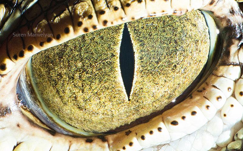 ojos5
