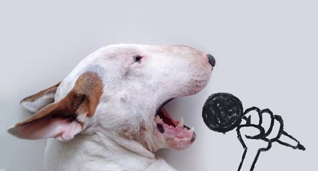perro-ilustrador
