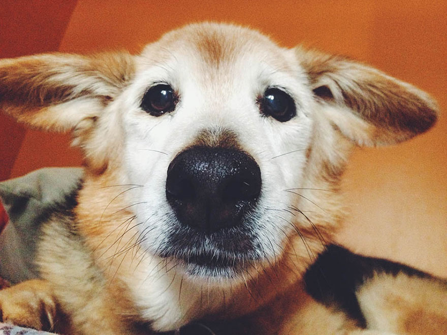 perro y amor 12