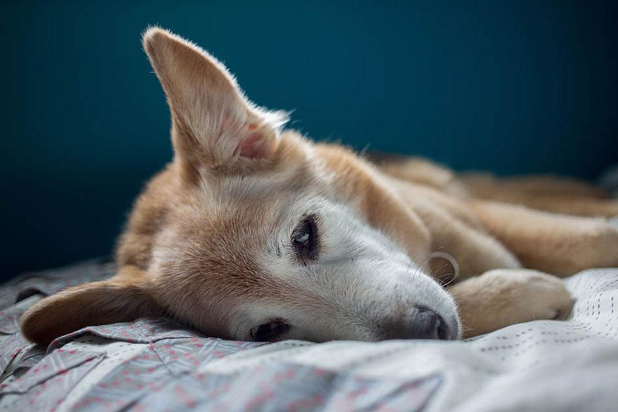 perro y amor 14