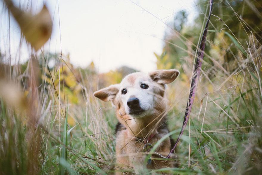 perro y amor 16