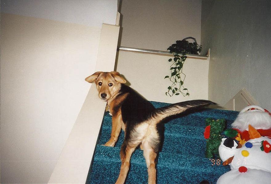 perro y amor 4