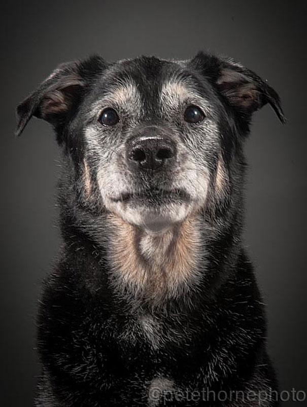 perros viejos 12