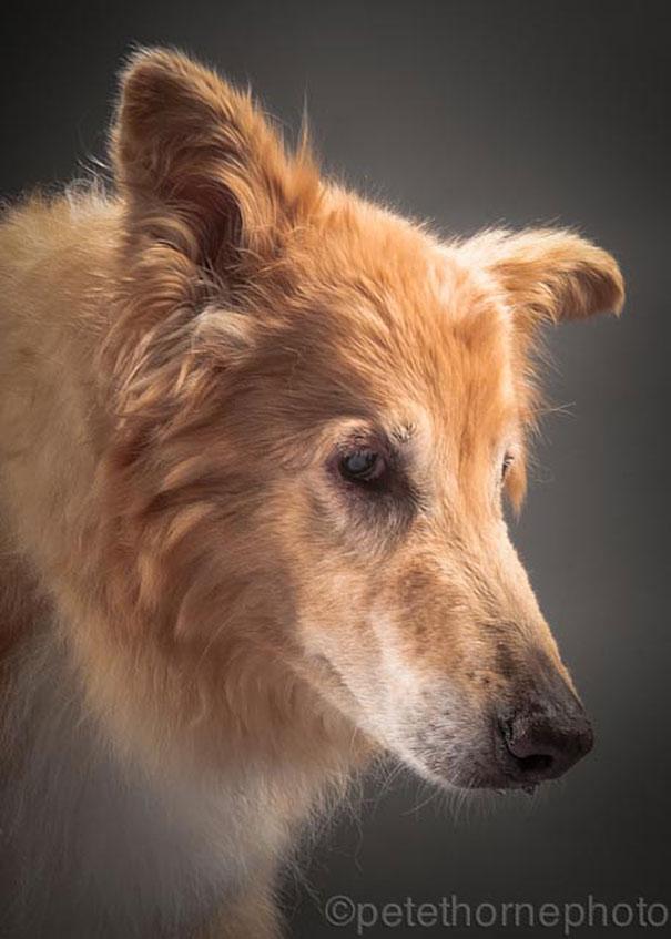 perros viejos 3