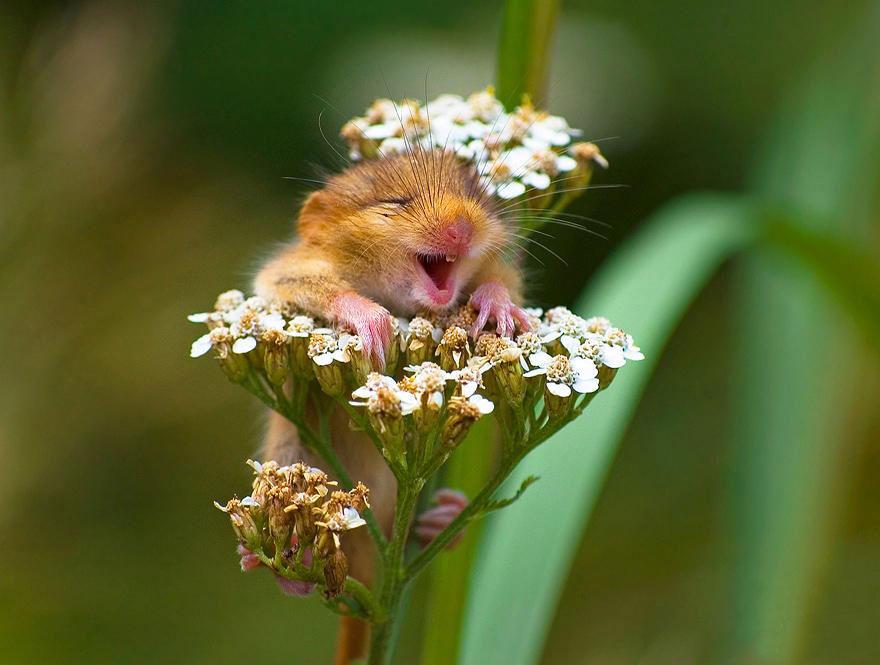 ratones-tiernos-1