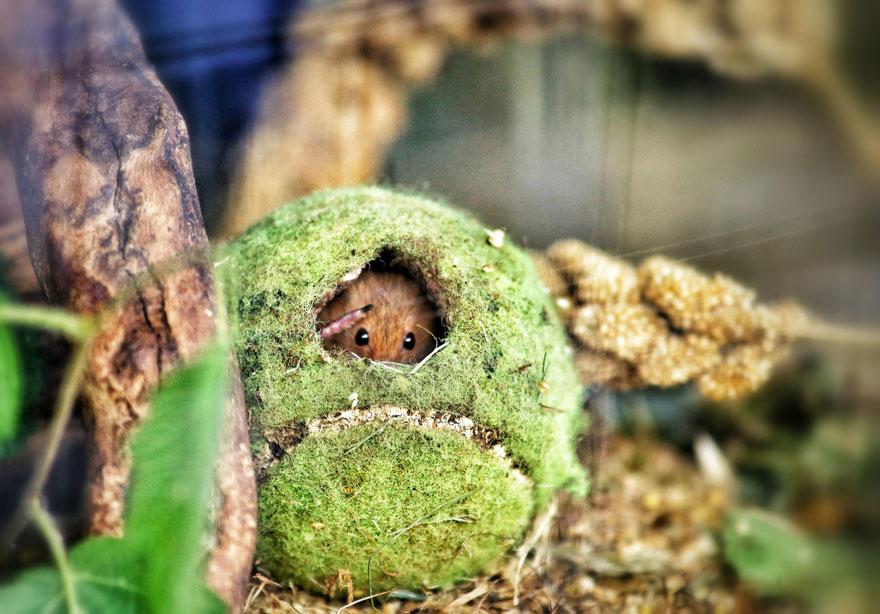 ratones-tiernos-11