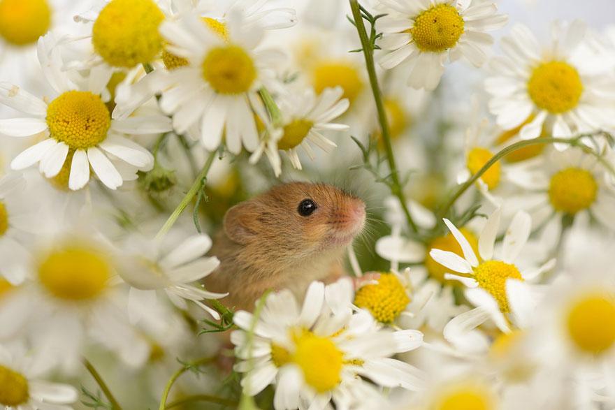 ratones-tiernos-12
