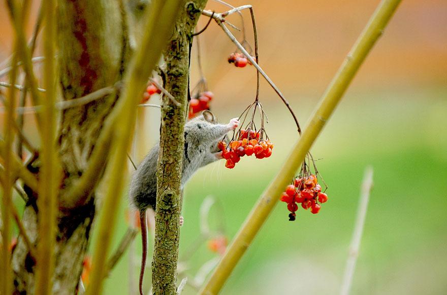 ratones-tiernos-13