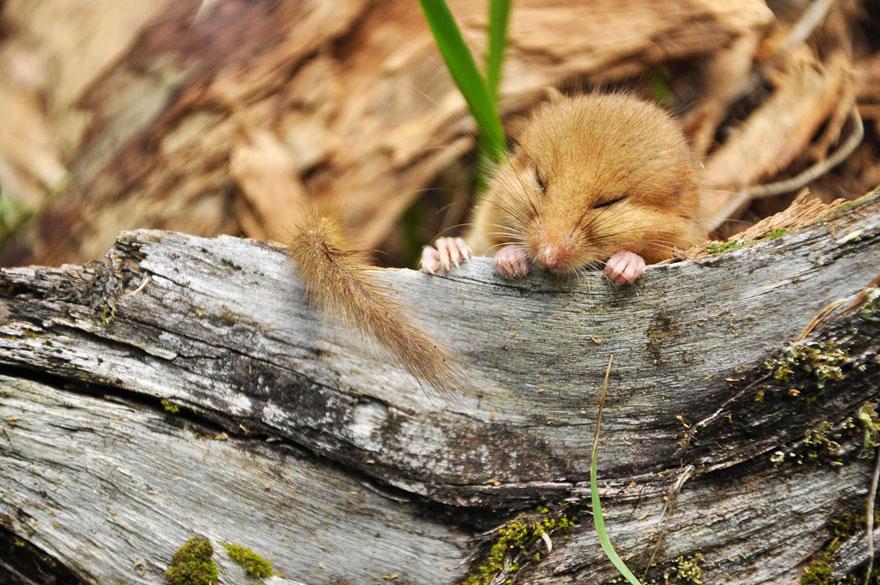 ratones-tiernos-14