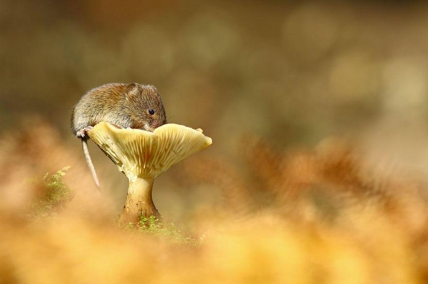 ratones-tiernos-15