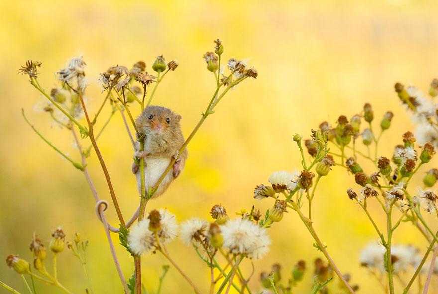 ratones-tiernos-18