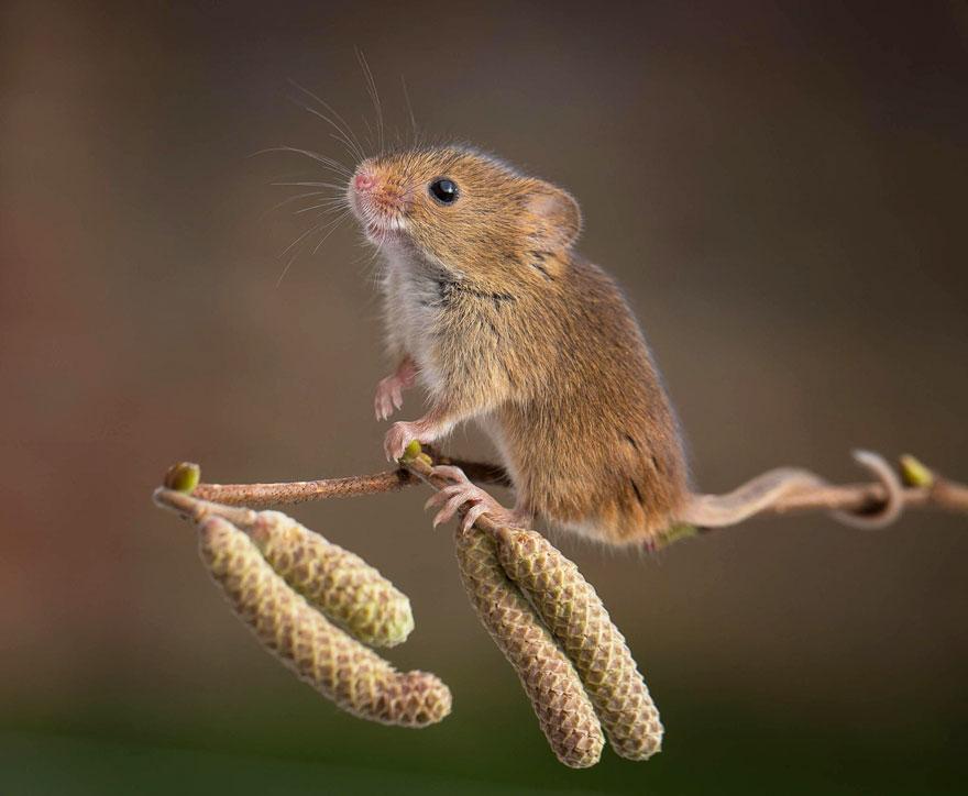 ratones-tiernos-19